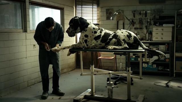 Onurunu kazanmak isterken masumiyetini kaybeden adam: Dogman (2018)