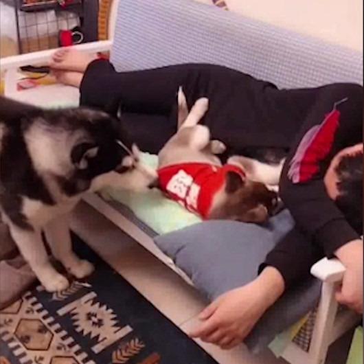 Kendi yavrusunu sahibinden kıskanan köpek