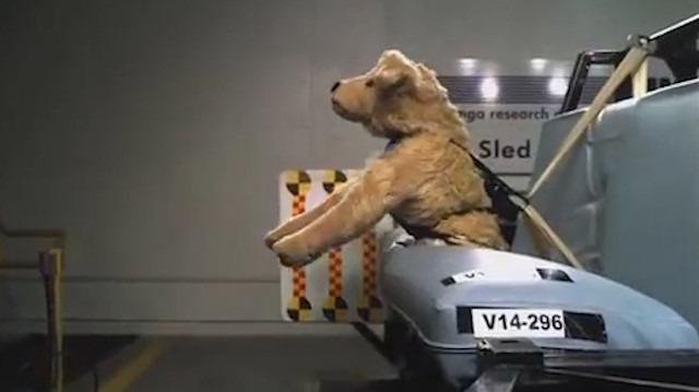 Çarpışma testi: Otomobil kazalarında evcil hayvanlara ne oluyor?