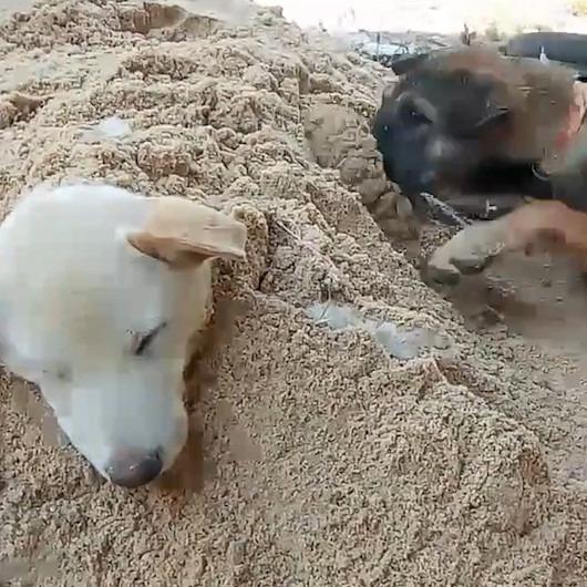 Kız kardeşini kuma gömen sevimli köpek izleyenleri gülümsetti