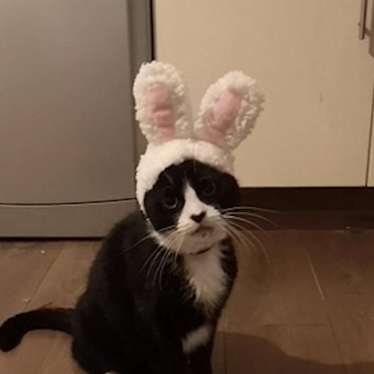 Tavşan kulaklığı takılan kedinin verdiği tepki kahkahaya boğdu