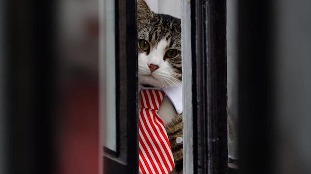 Julian Assange'ın gözaltına alınışını kedisi James'e izlettiler