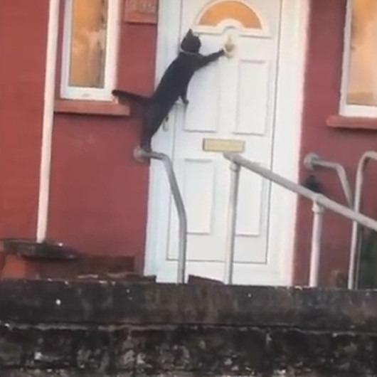 Eve girebilmek için kapı tokmağını çalıp sabırla bekleyen kedi