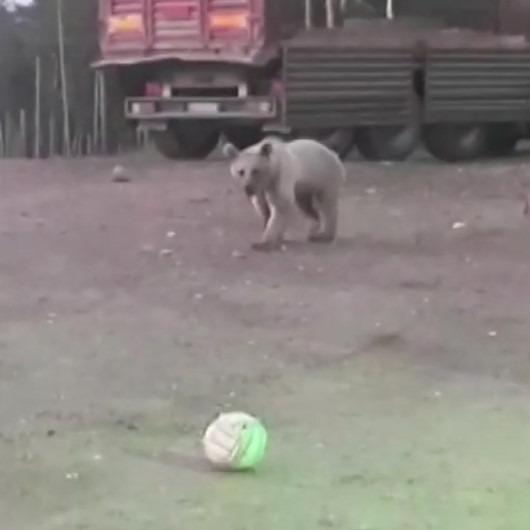 Boz ayıyla top oynamaya çalışan bekçi izleyenleri güldürdü