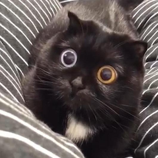 İki gözü de farklı renk olan kedi sosyal medyada fenomen oldu