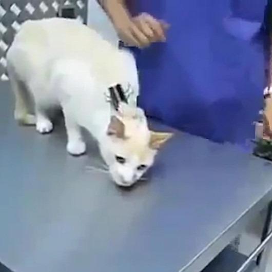 Yaramaz kedileri sakin tutmanın en iyi yolu