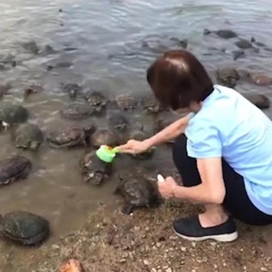 Göl kenarında kaplumbağaların kabuklarını temizleyen koca yürekli kadın