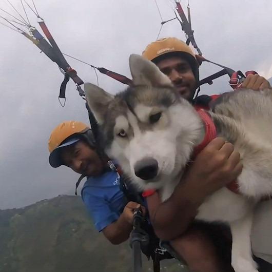 Sahibiyle birlikte yamaç paraşütü yapan Sibirya kurdunun aşırı rahat tavırları