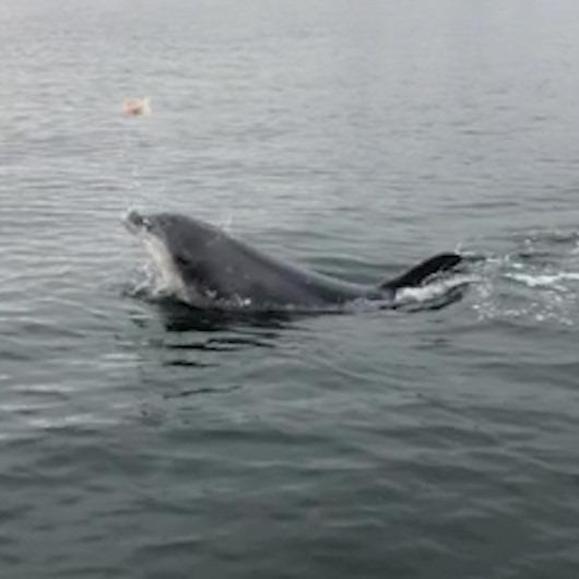 Ziyaretçileri görünce denizanalarını havaya atan yunusun minik gösterisi