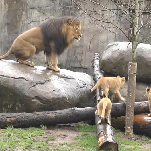 Hayvanat bahçesinde üç sevimli yavru
