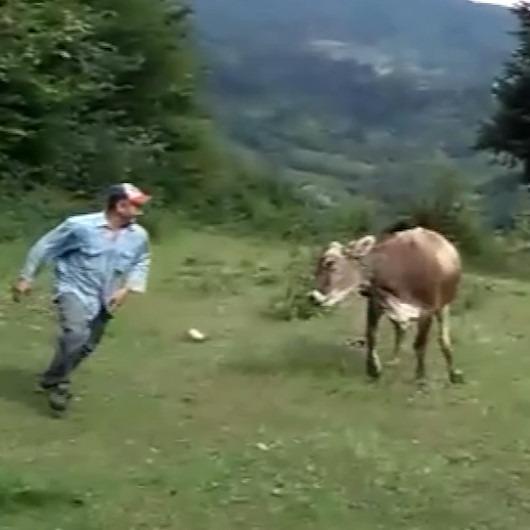 Sahibiyle oynamak isteyen ineğin içinizi ısıtacak görüntüleri