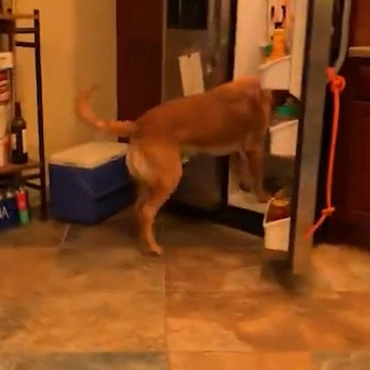 Sandviç hazırlarken sahibine yardım eden zeki köpek