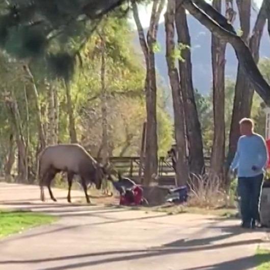 Öfkeli geyik vahşi yaşam parkında ziyaretçilere böyle saldırdı