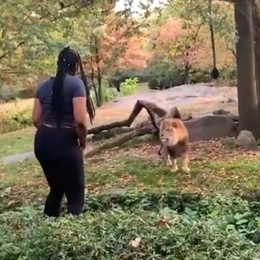 ABD polisi, aslan bölümüne girip 'bebeğim seni seviyorum' diyen kadını arıyor