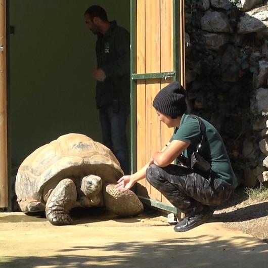 Türkiye'nin en yaşlı kaplumbağası: 99 yaşında