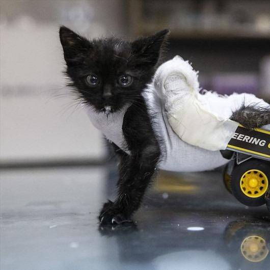 Yavru kedinin yeni hayatı: 'Kamyondan yürüteç!'