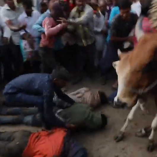 Bir garip festival: Bereket için kendilerini ineklere çiğnetiyorlar