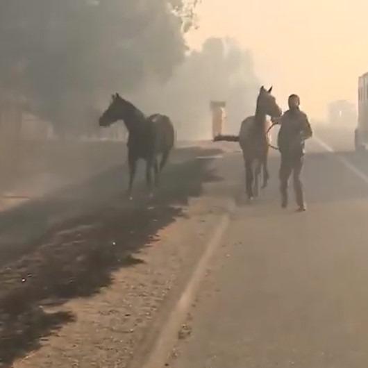 Kaliforniya'daki yangında mahsur kalan ailesini kurtarmak için alevlerin arasına dalan at