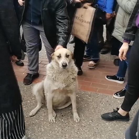 'Numaracı köpek' vatandaşları seferber etti