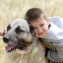 4 yaşındaki Ali Kangal köpekleriyle büyüyor
