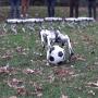 MIT'nin yeni minik robotları futbol oynarken hünerlerini sergiliyor